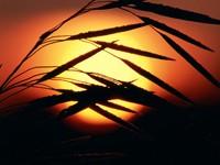 Фото 7.. Обои с природой для рабочего стола: солнце и небо