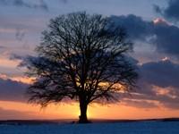 Фото 13.. Обои с природой для рабочего стола: закат солнца