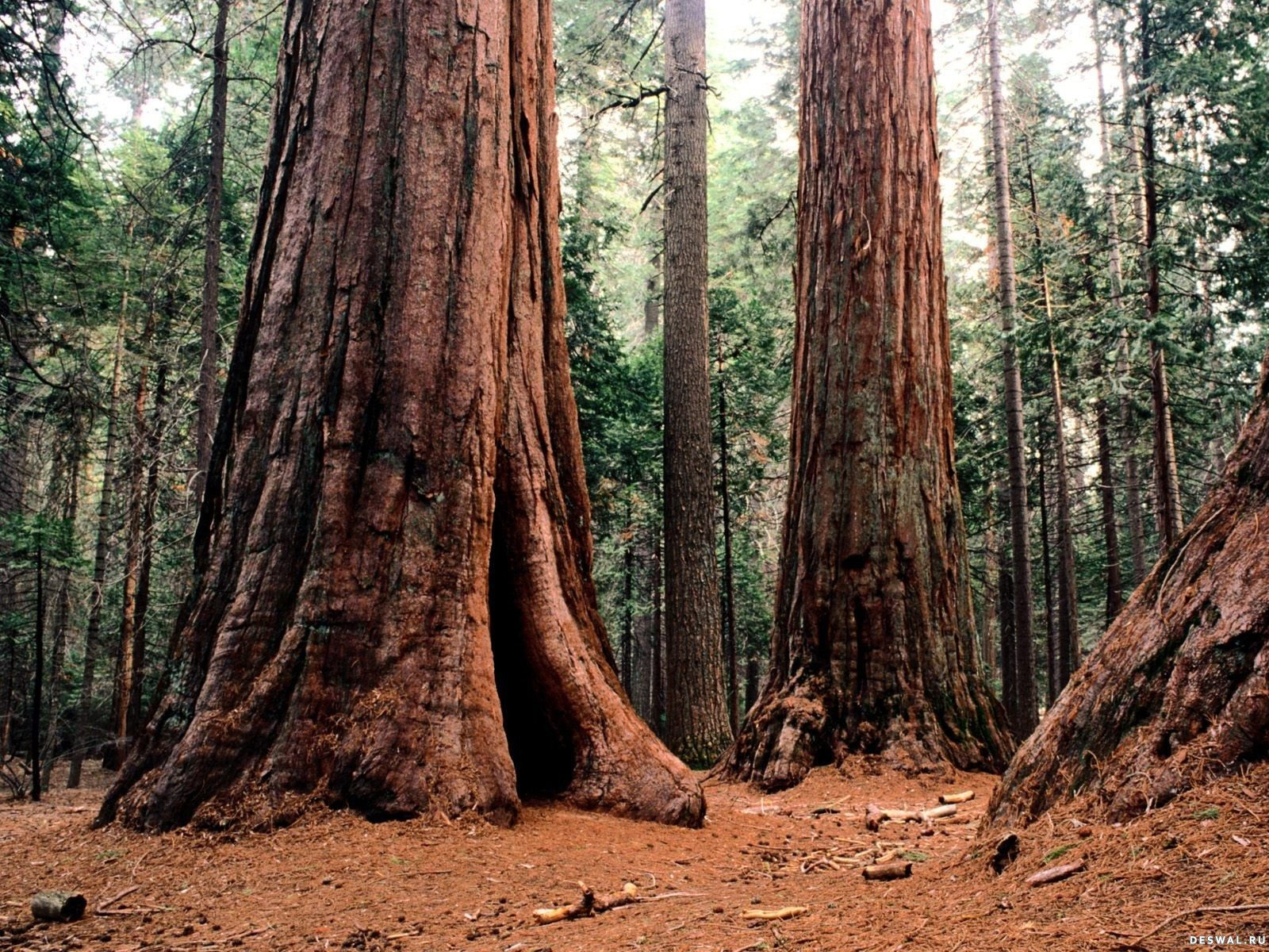 фотообои дерево: