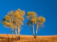 Фото 4.. Обои с природой для рабочего стола: деревья