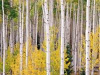 Фото 5.. Обои с природой для рабочего стола: деревья