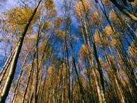 Фото 6.. Обои с природой для рабочего стола: деревья