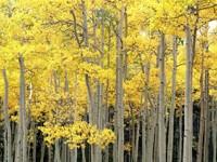Фото 7.. Обои с природой для рабочего стола: деревья