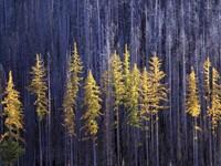 Фото 8.. Обои с природой для рабочего стола: деревья