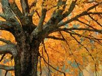 Фото 9.. Обои с природой для рабочего стола: деревья