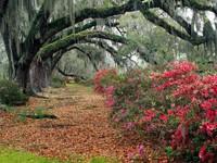 Фото 10.. Обои с природой для рабочего стола: деревья