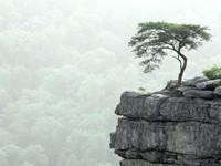 Фото 12.. Обои с природой для рабочего стола: деревья
