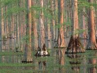 Фото 13.. Обои с природой для рабочего стола: деревья