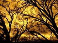 Фото 14.. Обои с природой для рабочего стола: деревья