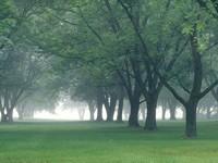 Фото 15.. Обои с природой для рабочего стола: деревья