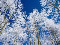Фото 3.. Обои с природой для рабочего стола: зима