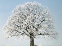 Фото 9.. Обои с природой для рабочего стола: зима