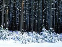 Фото 13.. Обои с природой для рабочего стола: зима