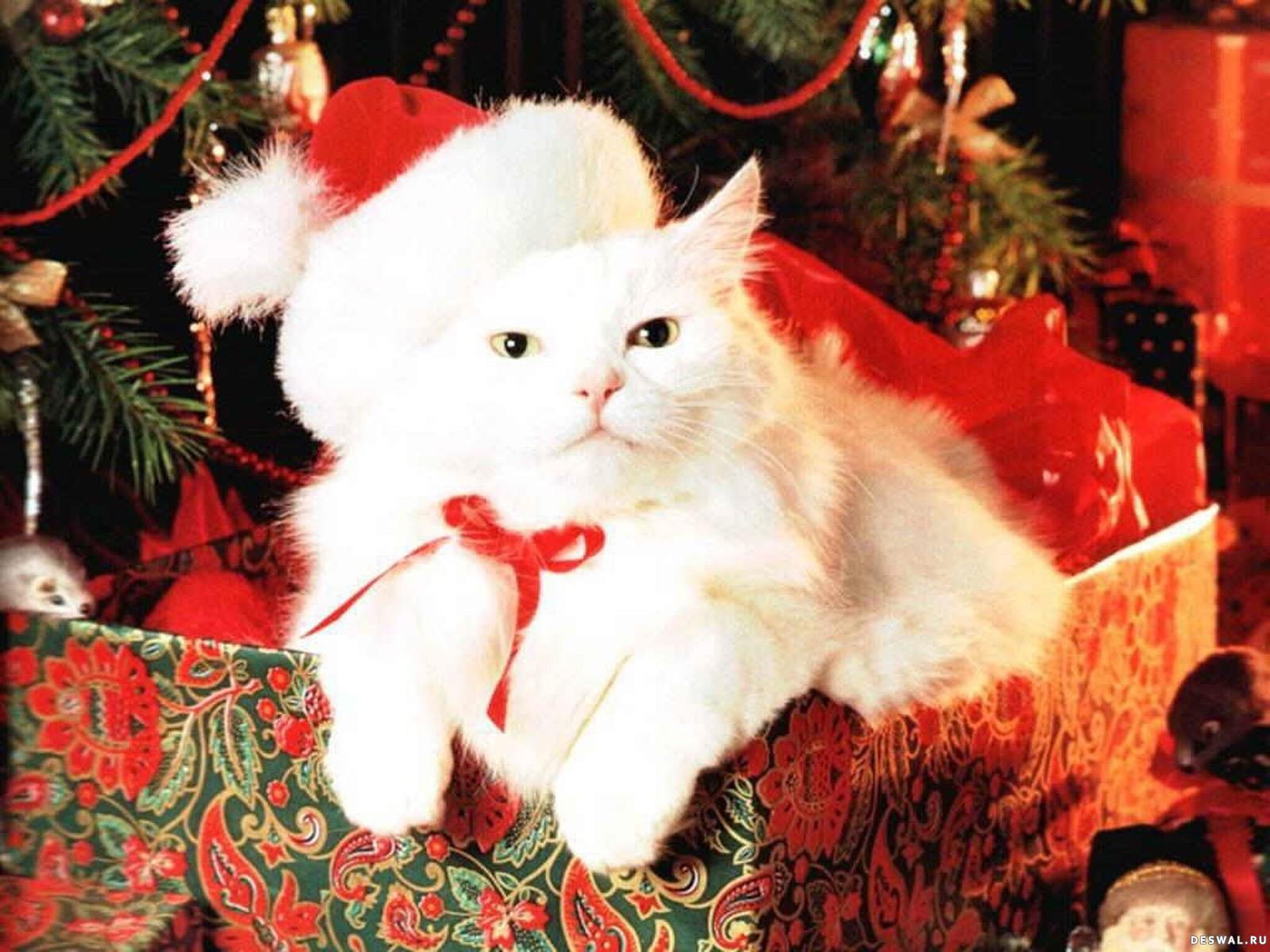 Людмилка. Желаю счастья. С Новым Годом, красавица.