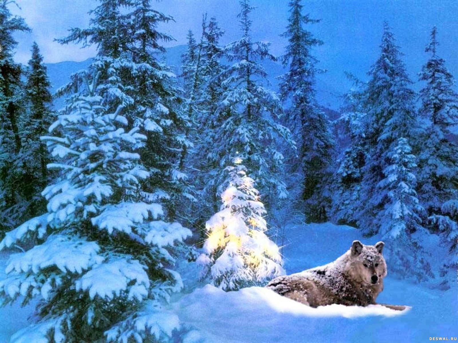 Отдыхай море, зимний лес анимашки