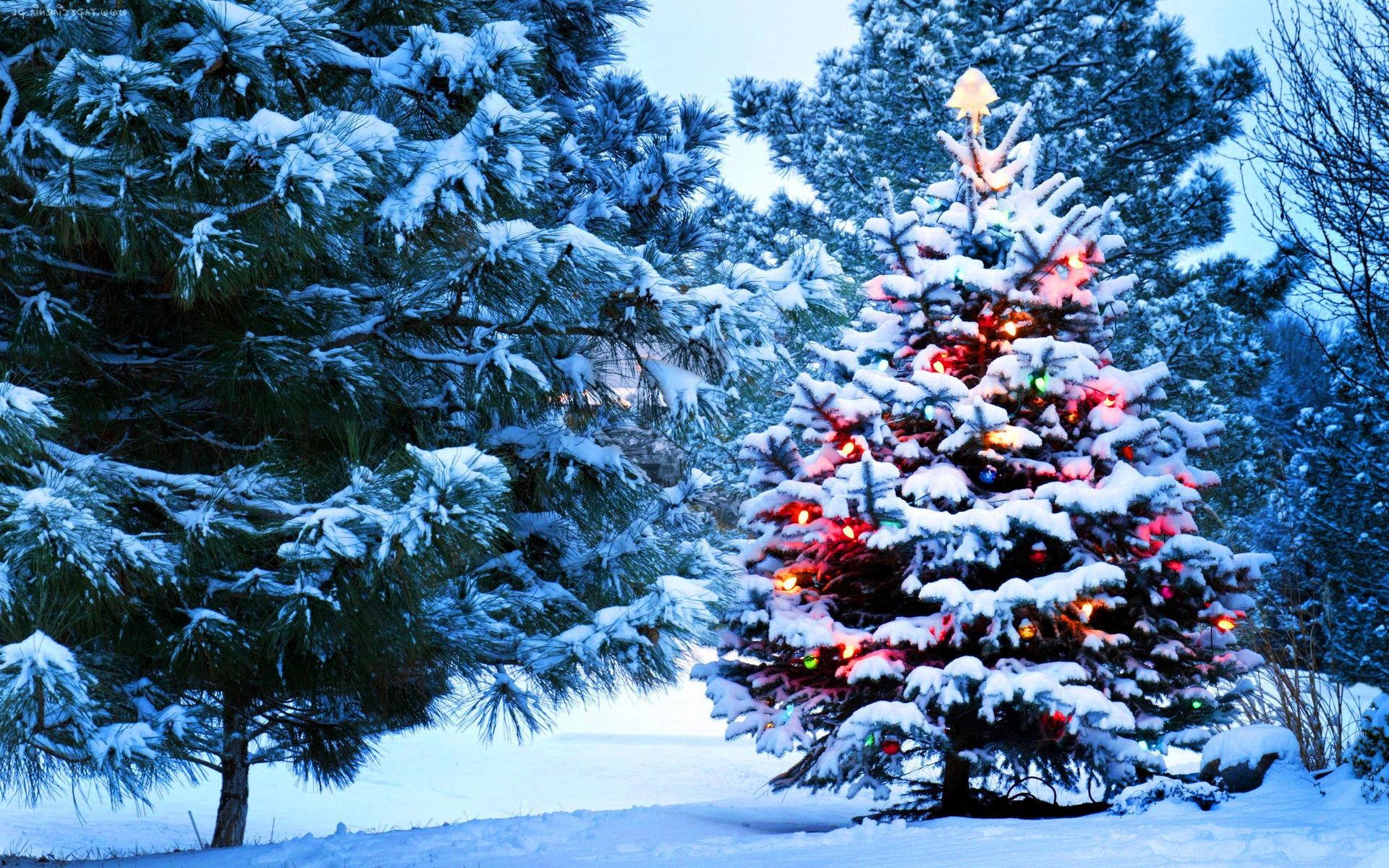 В России могут разрешить рубить елки к Новому году