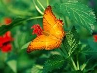 Желтая бабочка на растении