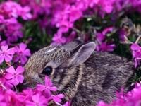 Серый зайчик в Розовых цветах