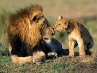 Лев с львёнком