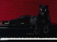 Черная пантера лежит на рояле