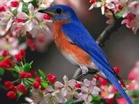 Птичка сине-оранжевого окраса