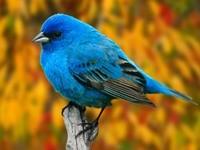 Птичка голубого окраса на ветке