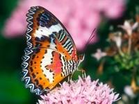 Разноцветная бабочка на цветке