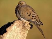 Птичка коричневого цвета