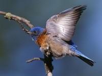 Птичка на ветке