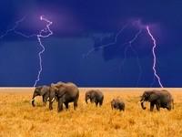 Стадо слонов перед дождем