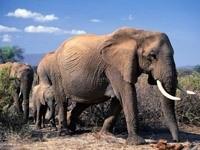 Путь слонов
