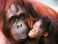 Обезьяна с малышом