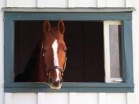 Лошадь в окне стойла