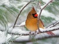 Птичка коричнево-желтого цвета