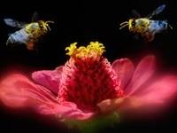Две пчелы над цветком
