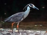 Серая большая птица у берега