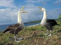 Разговор двух птиц на берегу
