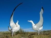 Танец двух птиц