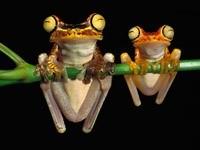 Две лягушки на зелёном стебле