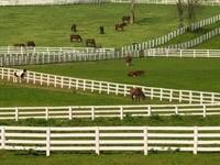 Загоны для лошадей