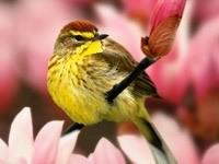 Желто-коричневая птица