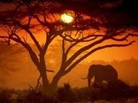 Слон под деревом на закате