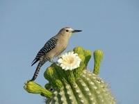 Птичка на кактусе