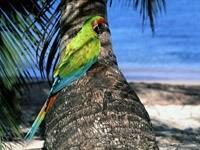Зелёный попугай на пальме