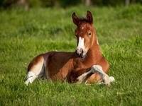 Лошадь лежит на траве
