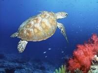 Черепаха на дне океана