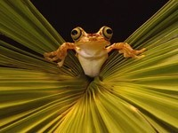Желтая лягушка на растении