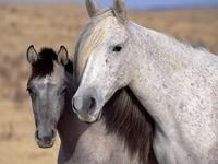 Белая лошадь с жеребёнком