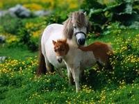 Белая лошадь с жеребёнком на траве