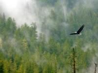Полет птицы над лесом